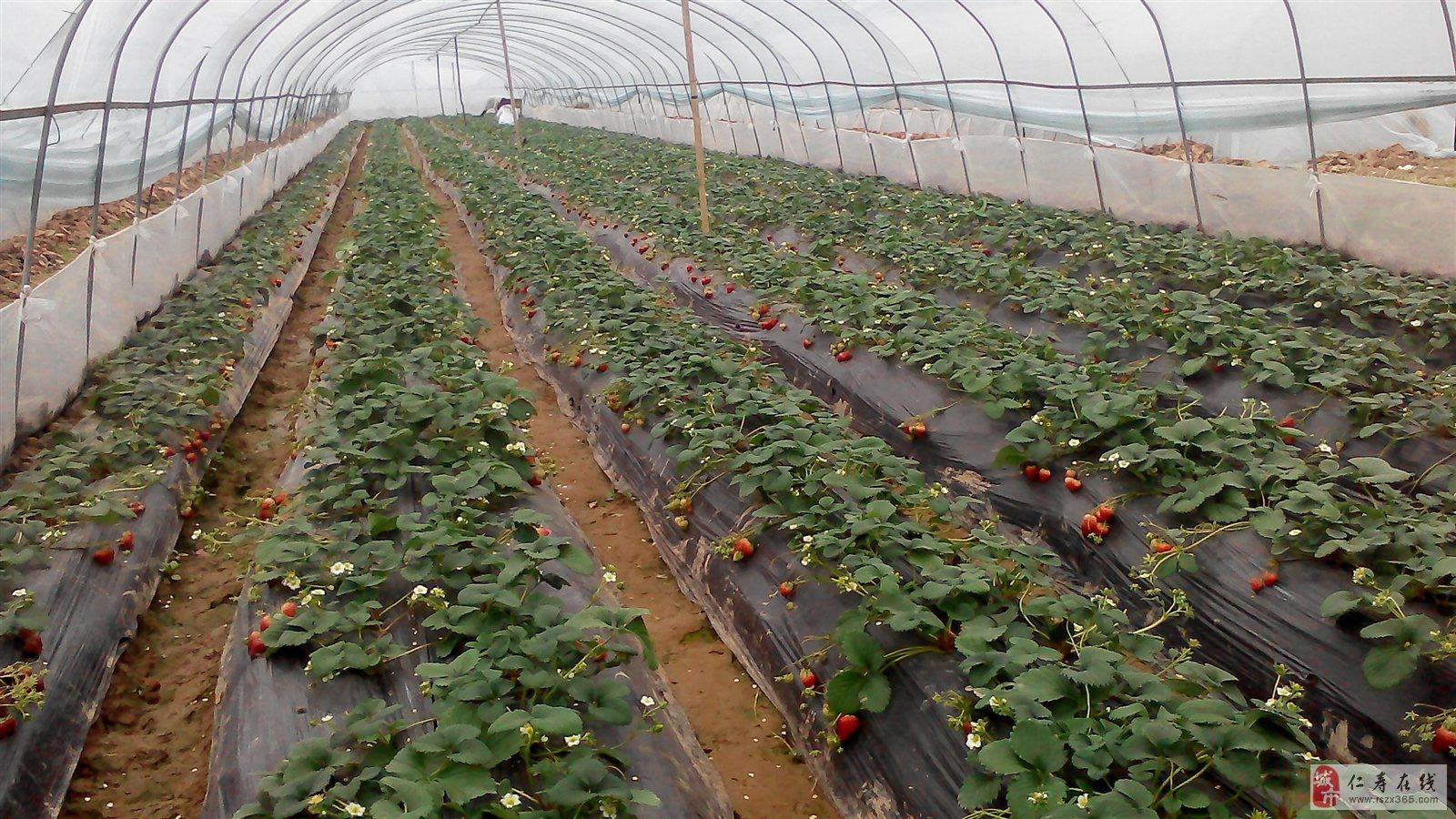 家庭农场�ylez)�9b$_馨馨家庭农场