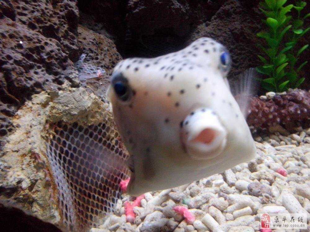 海底世界那些可爱的鱼