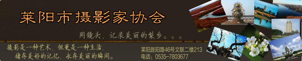 莱阳摄影封面