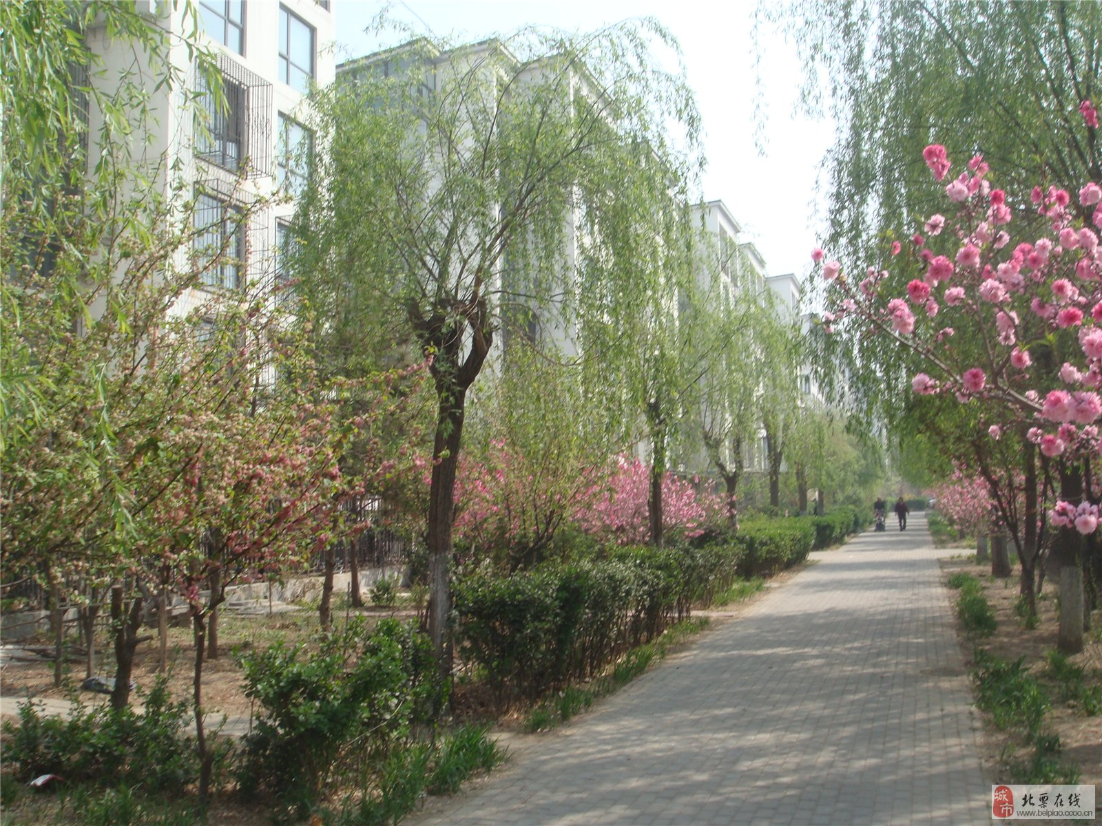 北京的春天_风光景物_北票论坛