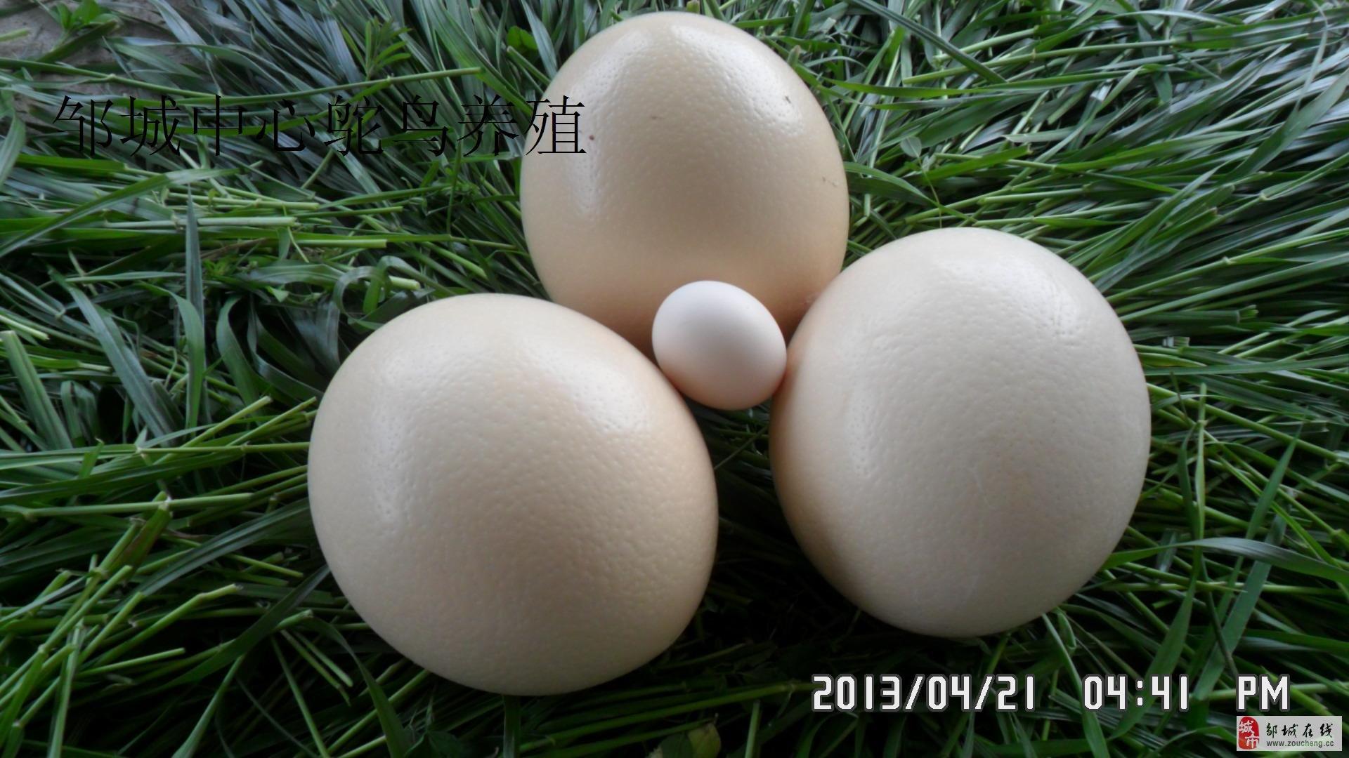 看看鸵鸟蛋工艺品好看不