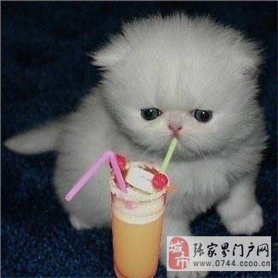 壁纸 动物 狗 狗狗 猫 猫咪 小猫 桌面 400_400