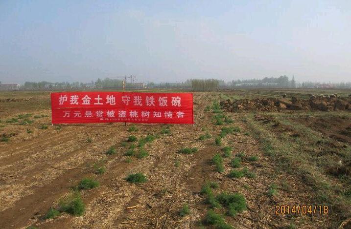 壁纸 成片种植 风景 植物 种植基地 桌面 717_469