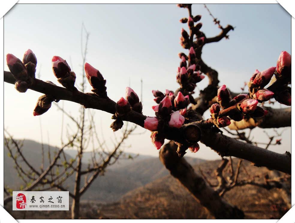 含苞欲放-春季(2014)