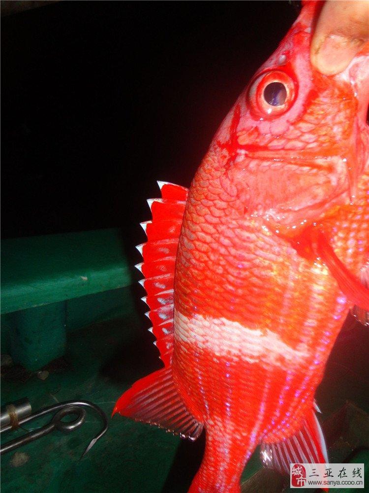 三亚户外钓鱼游记,快来一起体验钓鱼收获的乐趣!