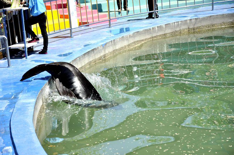 海狮精彩表演【摄于太原动物园】