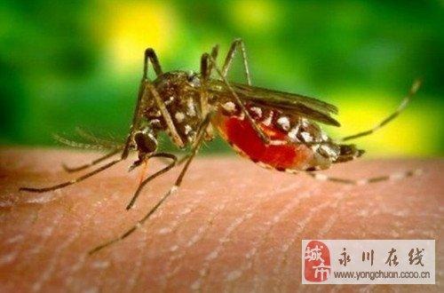 让蚊子不咬你――夏季你一定用得上的常识