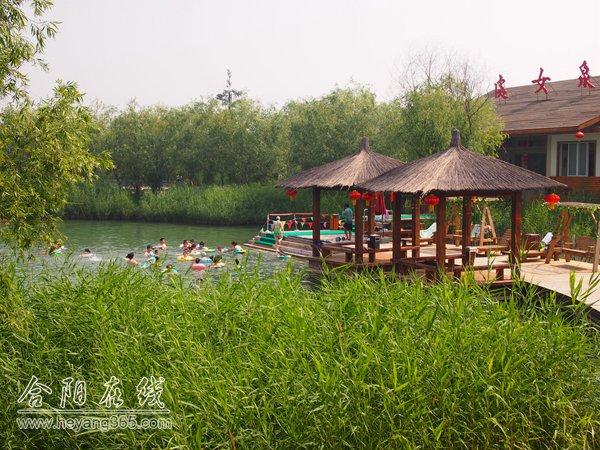 洽川風景區也迎來了最美旅游季,洽川的六月,成片成片新生的蘆葦隨風舞
