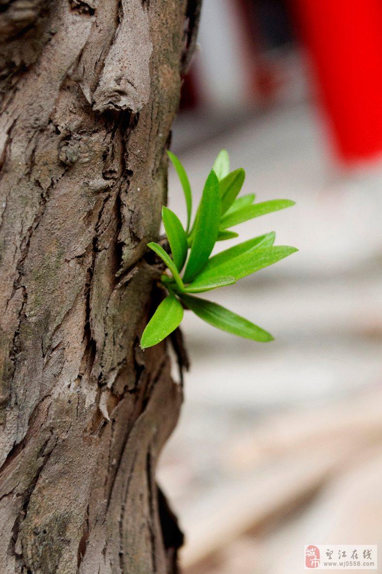 ppt 背景 壁纸 电脑桌面 发芽 绿色 绿色植物 嫩芽 嫩叶 新芽 植物