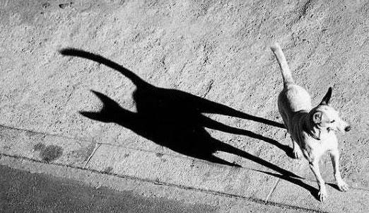 拖长一地的影子