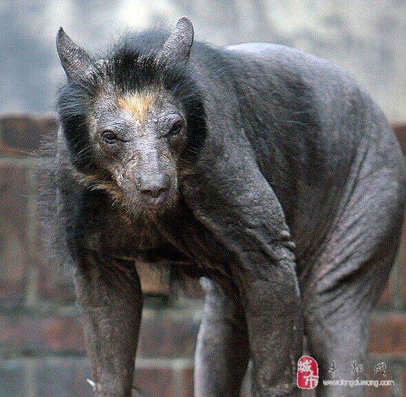 【娱乐】各种动物没了毛之后的样子…还你还认识几只