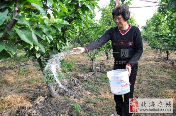 关于梨树施肥的技巧小编就给大家讲解到这里