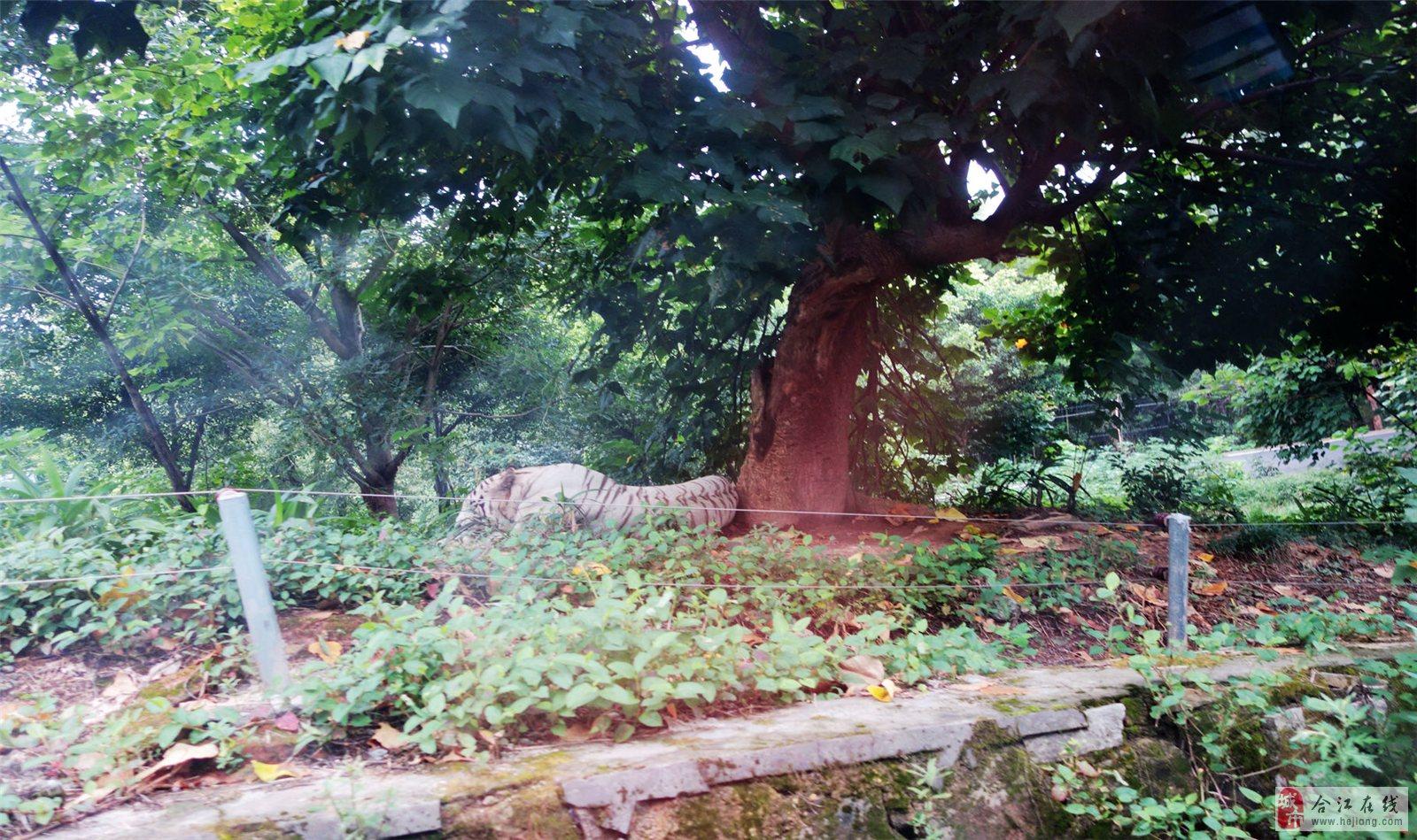 重庆野生动物园——(2)