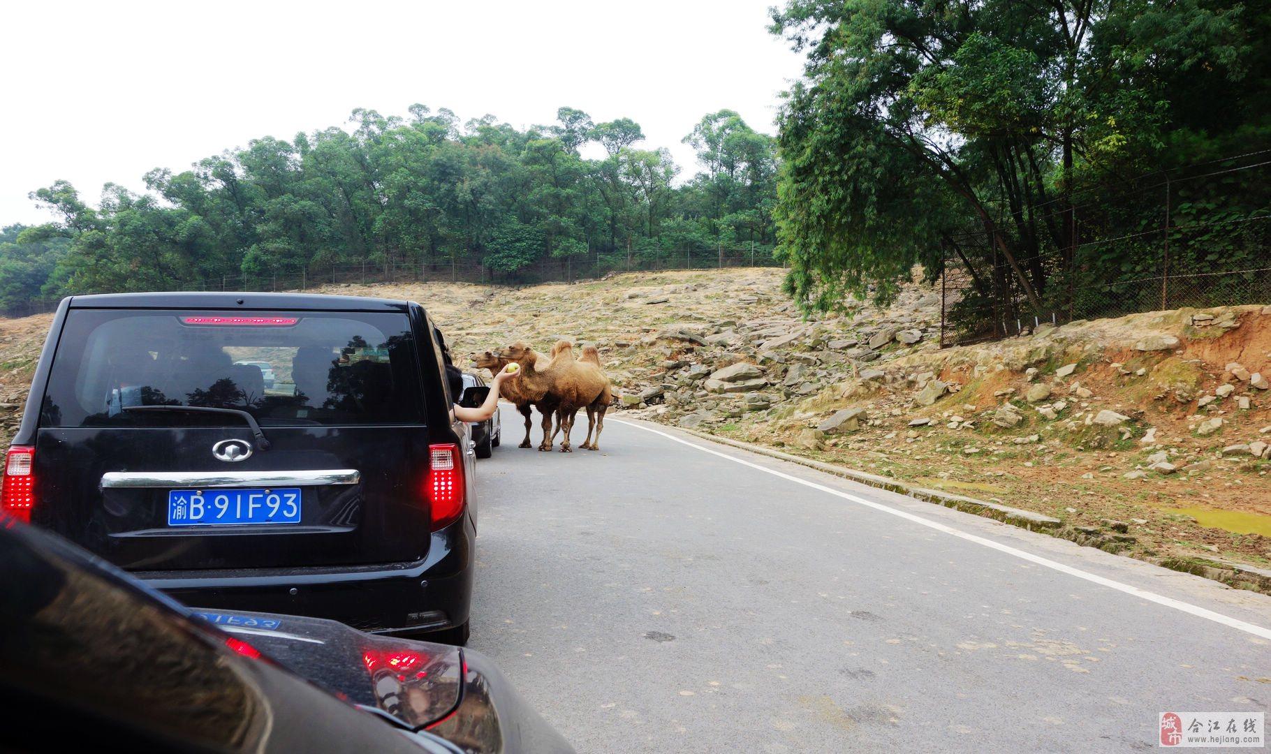重庆野生动物园——(3)