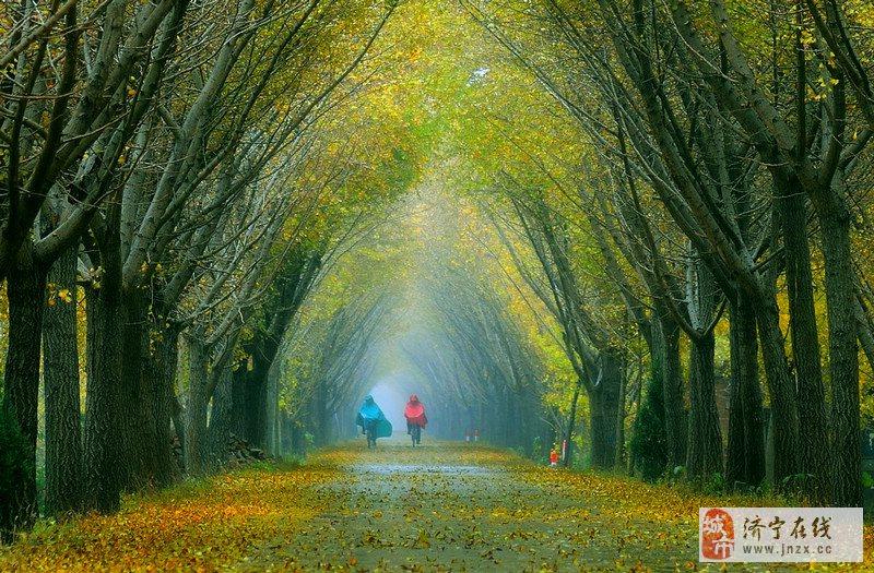邳州森林星水漆