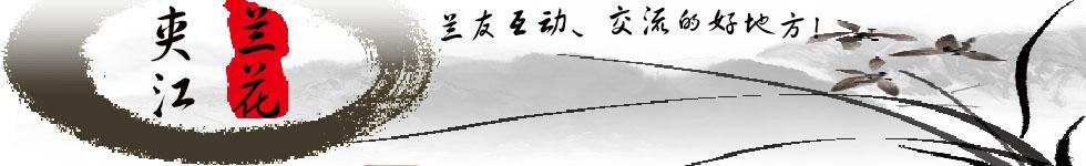 夹江兰花封面