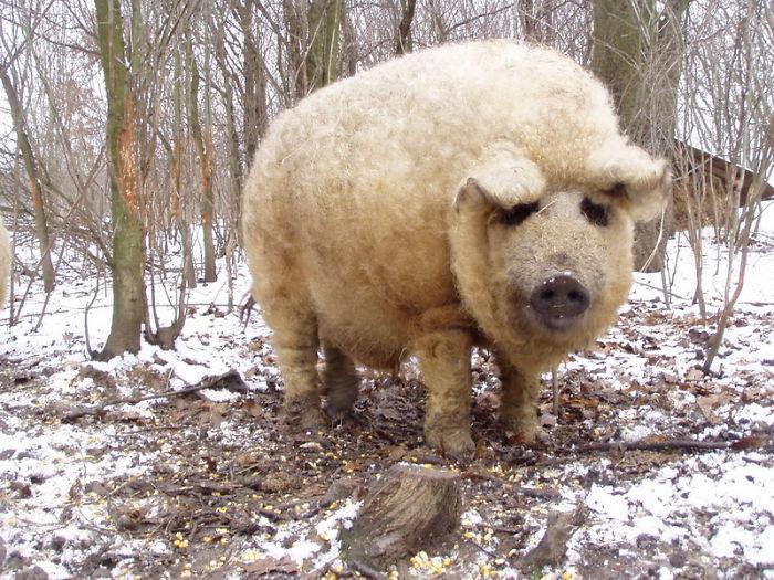 世界上爆可爱的动物图片欣赏-莱阳图吧
