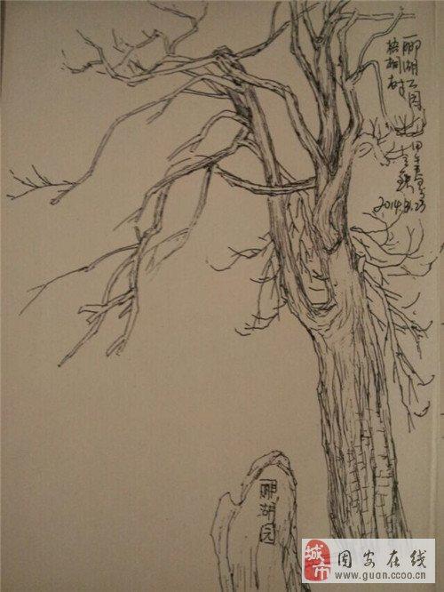 一般情况,树枝都是向上生长,传统画论