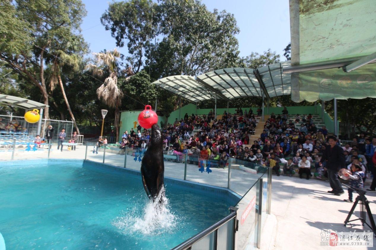 湛江寸金动物园全面新升级啦!新建了海狮表演,杂技表演,动物表演为一体的综合表演场,以海洋动物园组成的五彩斑斓的海洋馆,狮虎生态园,猴山,水禽等场馆设施。新添动物品种增至目前100余种、近500头(只)的动物,其中不乏有东北虎、金钱豹、非洲狮、黑猩猩、狒狒、博士猴、小熊猫等珍稀动物。快带你家小朋友来大开眼界,认识新动物吧!  今天和小伙伴们一起逛寸金动物园,门口两边的长颈鹿和米老鼠好可爱,好想抱抱米老鼠  买票咯,注意注意:现在成人票价只需10块钱哦!1.