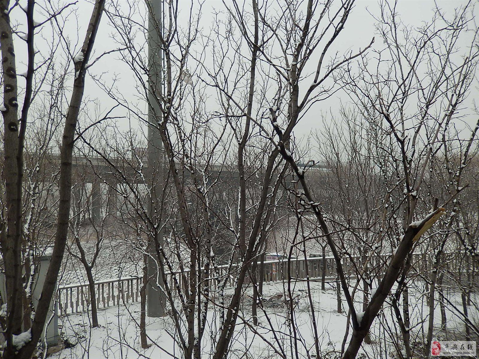 院后小树林的雪景