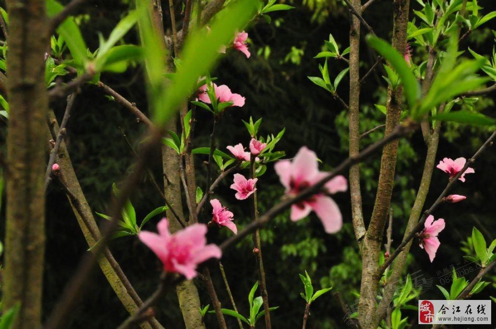 微信自然风景头像 花朵