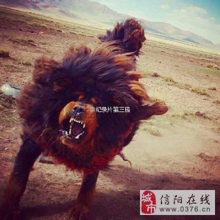 看人家老外拍的西藏大片