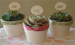 多肉植物主题婚礼布置;为婚礼添一抹清新