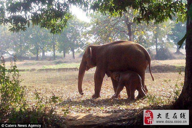 壁纸 大象 动物 634_423