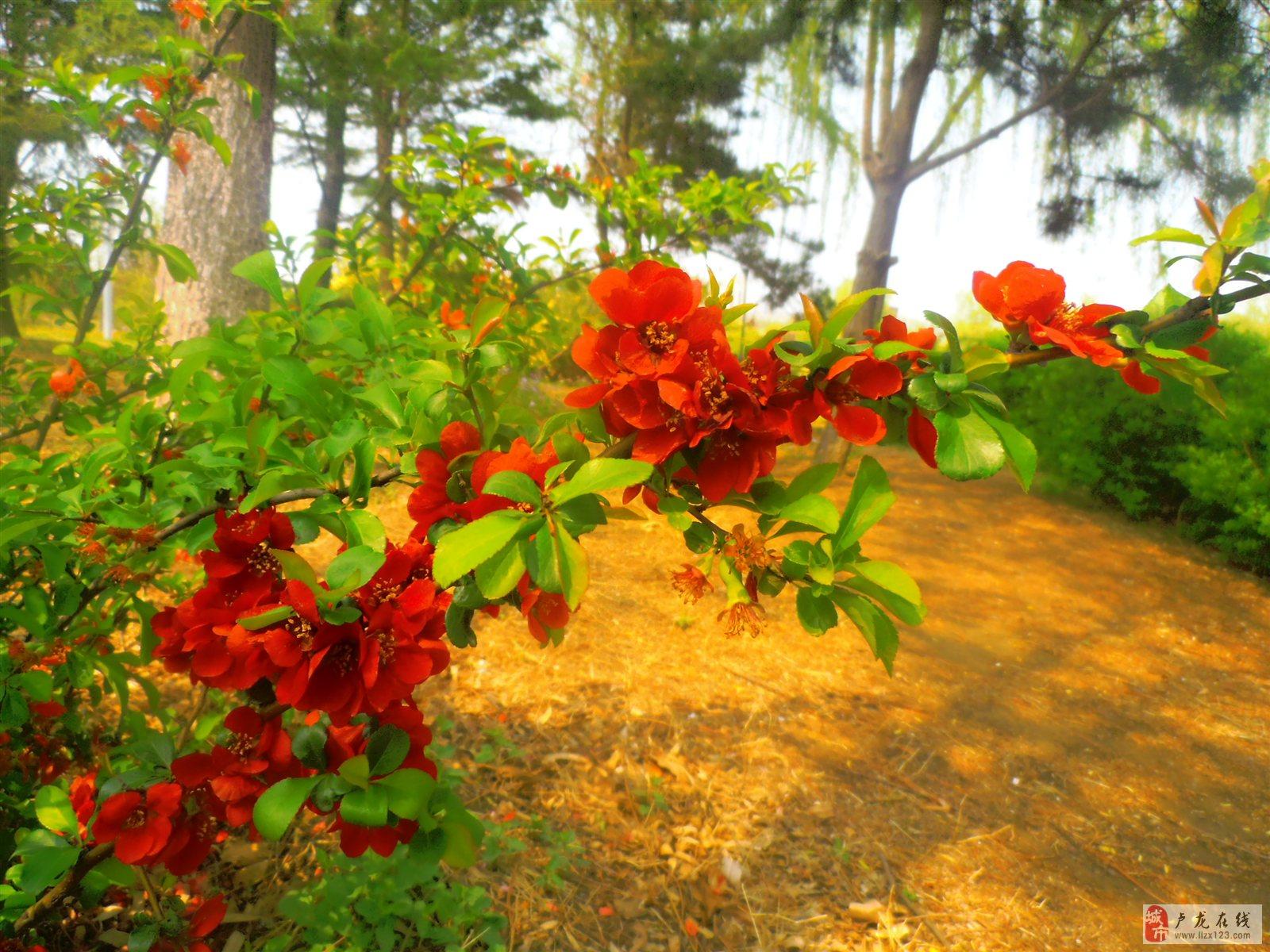 公园的花伸枝竞放