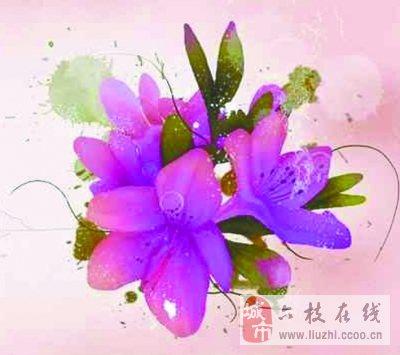贵州四季赏花地图