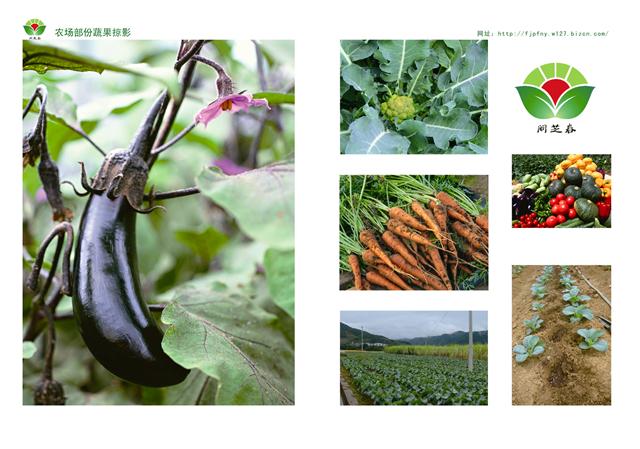 1800元的有机绿色蔬菜包季度(三个月)体验套餐