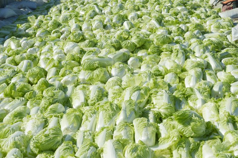 朴智昮白菜壁纸