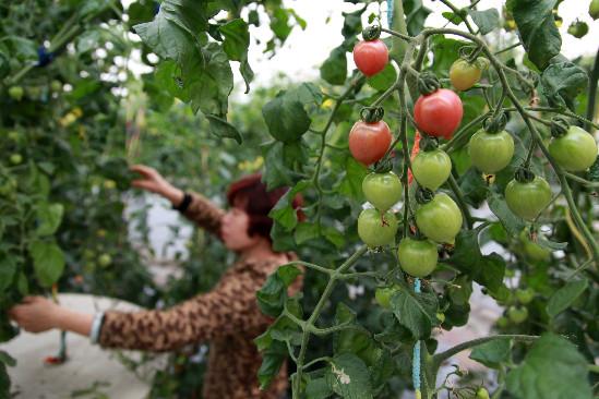 壁纸 果树 矢量 树 水果 小果 植物 549_366