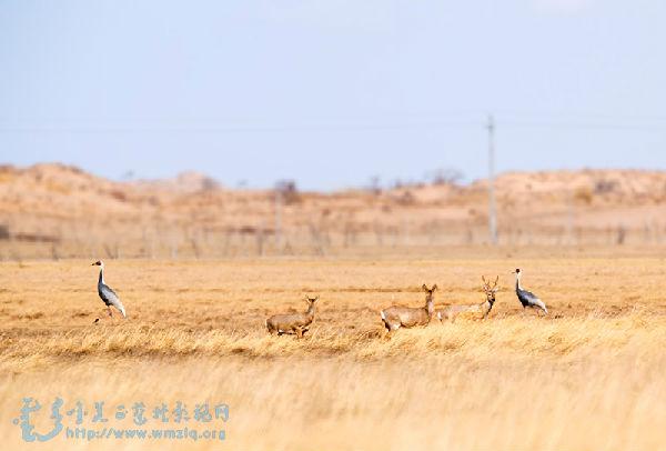 正蓝旗森林公安局-关于开展过境候鸟保护的通知