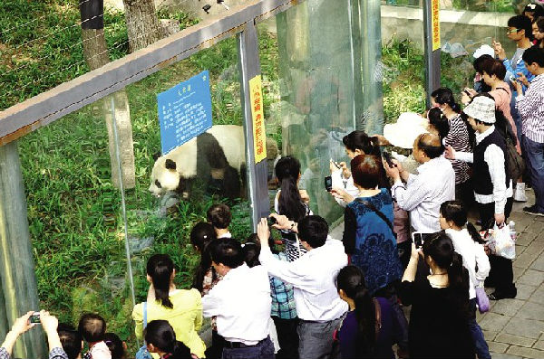 [导读]熊模熊样很有范儿 本网讯(记者肖敏、通讯员王安定)要想知道宜昌市民对大熊猫希望的喜欢程度,只要到市儿童公园看看动物园门口排的长队就知道了!   昨天是大熊猫希望与宜昌市民见面的第一天,动物园售票处前早早地就排起了长队。9时30分,记者看到两排购票队伍已排到了百米开外,且人群还在不断增加。现场维护秩序的工作人员介绍,8时就有市民开始排队购票了。看来,在过节的日子里,为了一睹大熊猫希望的熊样,不少市民还专门起了个早呢!   走进动物园,熊猫馆周围已经围满了参观的市民,手机、相