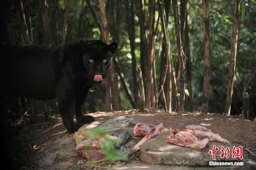 重庆动物园投喂冰块为动物防暑降温