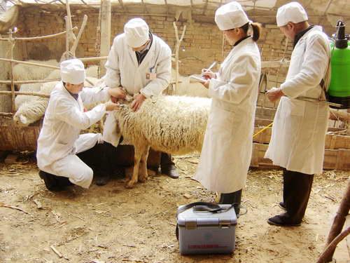 林州市动物疫病防控技能竞赛完美落幕