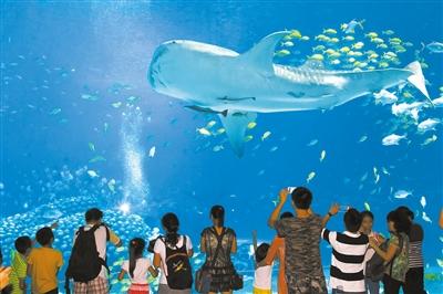 动物展区相结合的设计,辅以震撼独特的海洋主题花车和烟花幻彩演出,为