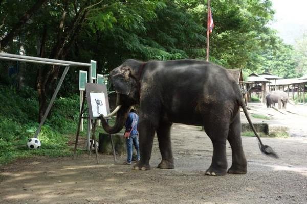 森林大象画画图片