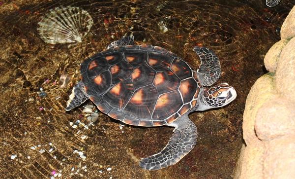 海龟种类图片大全