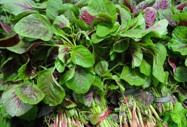 健康饮食:春天吃10种野菜 不仅防癌还有药用...