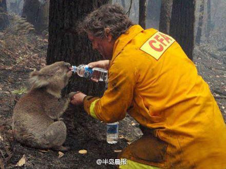人和动物之间那些温暖的瞬间