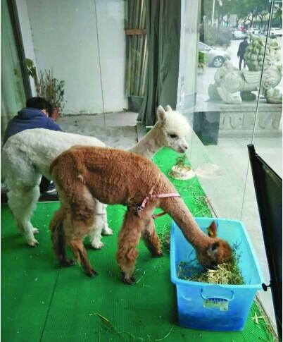 动物吃饭gif