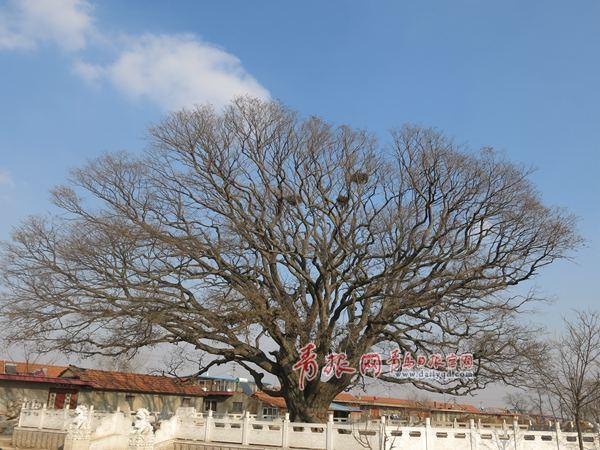 西三都河村,地处青岛市莱西市姜山镇西南端,是一座古貌犹存的明清古