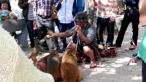 养猴子犯法吗?网曝红色娘子军雕像公园有人耍