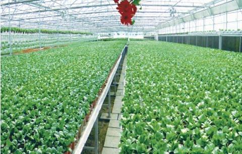 最新固安县农业发展综述图片