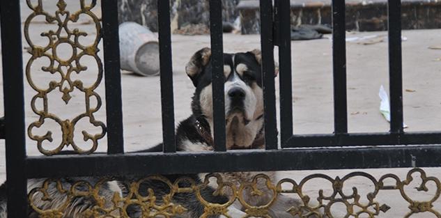 自贡别墅区车门狂吠安全感为防患养犬缺乏扰富人前别墅豪图片