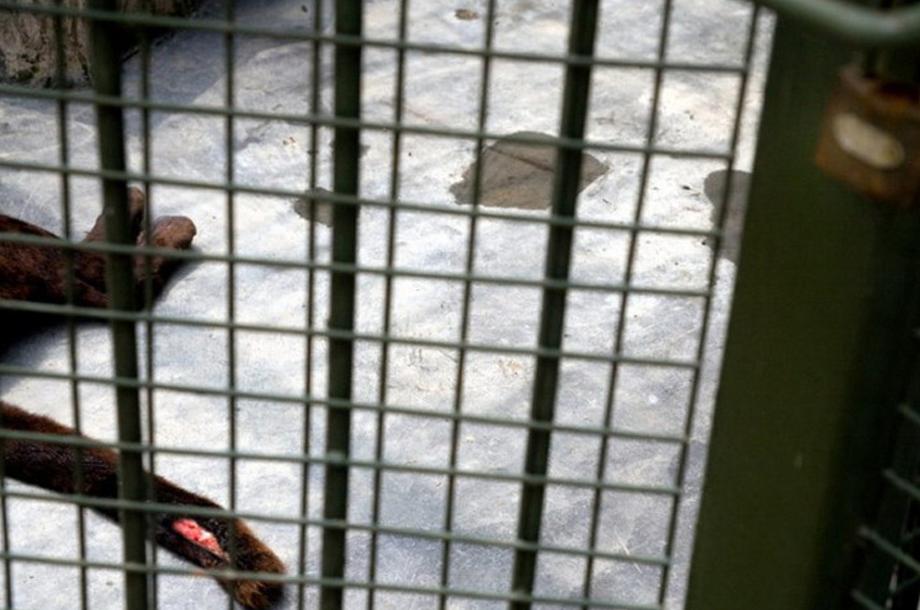 中国动物园现状引发国际关注_阜新热点资讯
