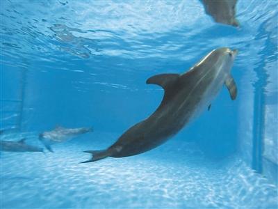 可爱的小海豚们一天天地在长大