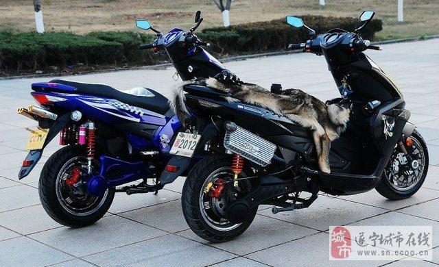 本市诚信出售品牌摩托车和电动车